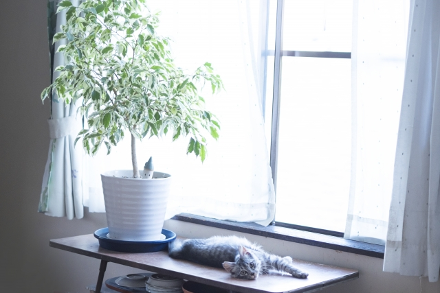 綺麗な部屋と遊びと猫
